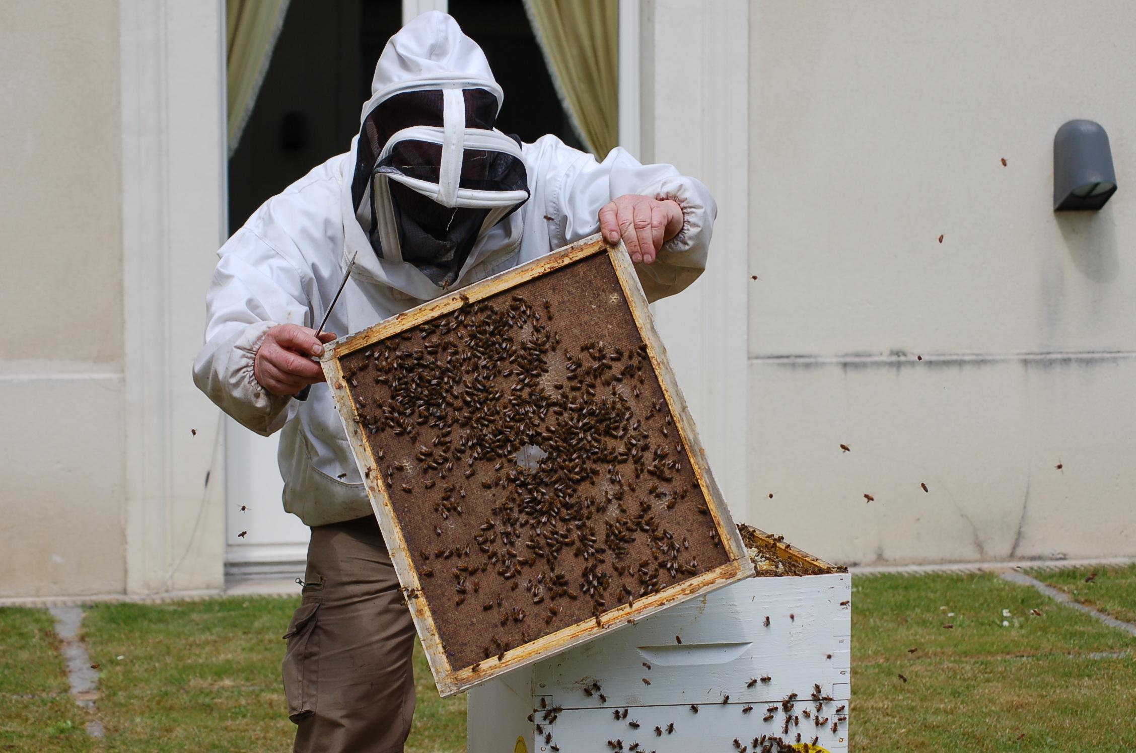 apiculteur_au_travail_Felix_gil (6)